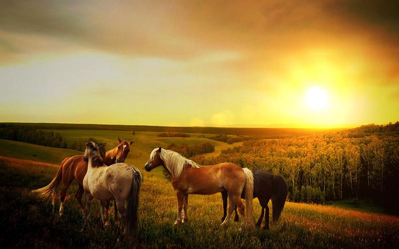 Ngựa là biểu tượng của sự mạnh mẽ, kiên trì và bền bỉ