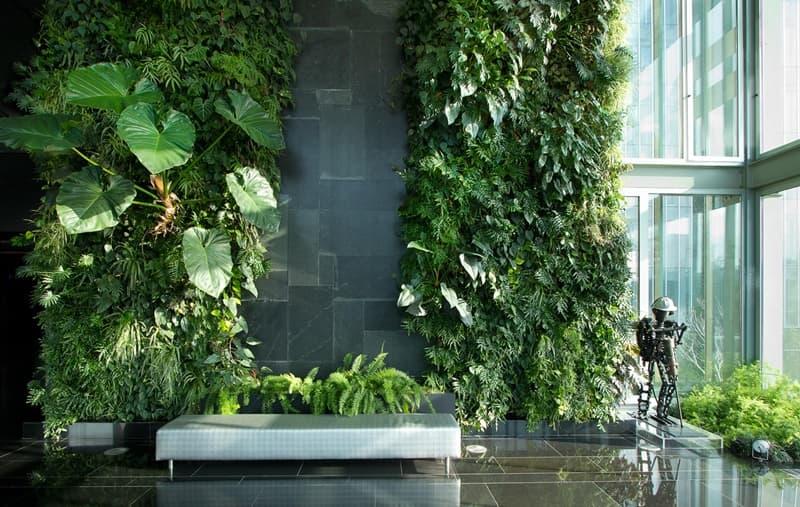 Bạn có thể tạo ra một mảng tường xanh với các loại cây dương xỉ, thân leo