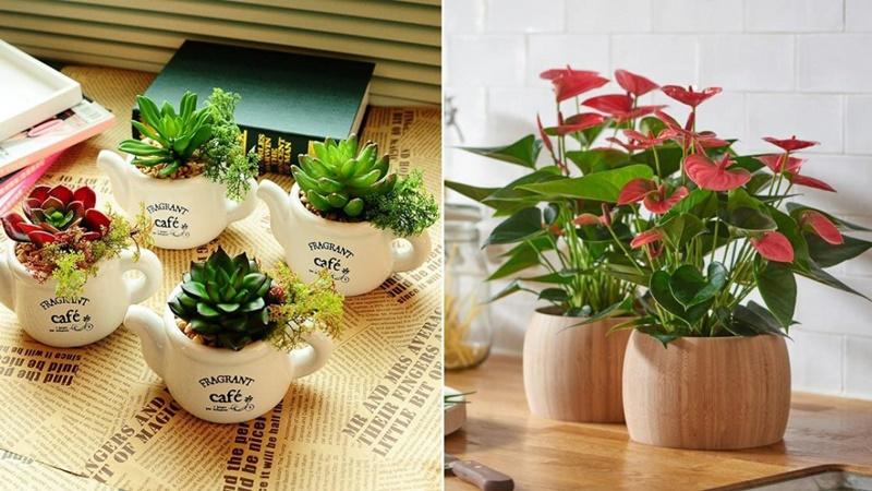 Nên đặt các chậu cây, hoa nhỏ trên bàn làm việc để tạo không gian xanh