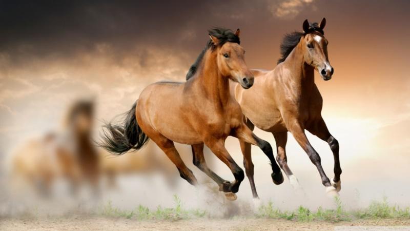 Ngựa là một trong 12 con giáp
