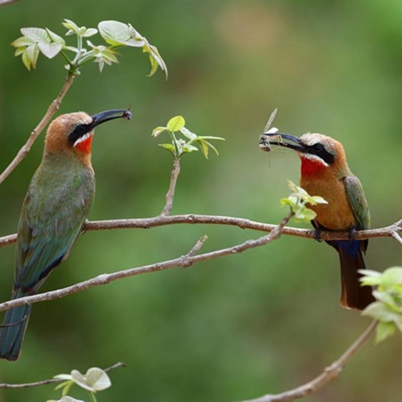 """Vào thời cổ đại, chim hỷ tước được ví như """"thần nữ"""""""